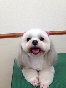 犬モデル.jpg